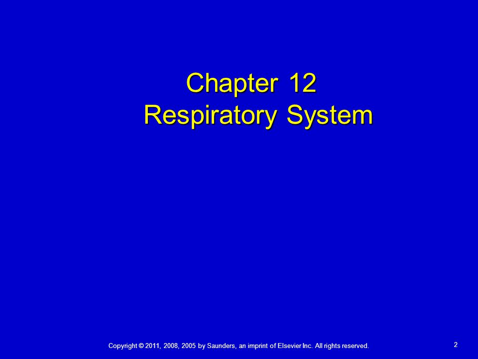 Chapter 12 Respiratory System Copyright © 2011, 2008, 2005 by Saunders, an imprint of Elsevier Inc.