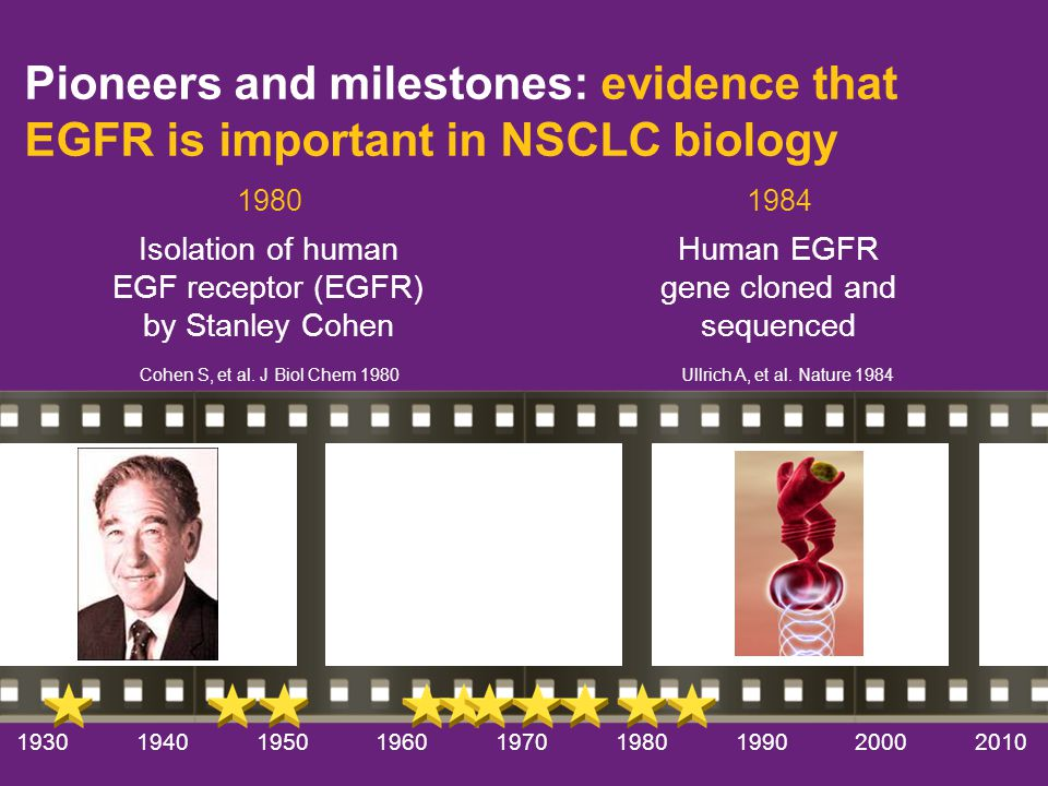 194019501960197019801990200020101930 Pioneers and milestones: evidence that EGFR is important in NSCLC biology Isolation of human EGF receptor (EGFR) by Stanley Cohen Cohen S, et al.