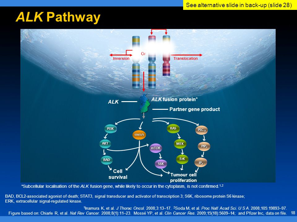 18 ALK Pathway InversionTranslocation Or ALK Partner gene product ALK fusion protein* Tumour cell proliferation Cell survival PI3K BAD AKT STAT3/5 mTOR S6K RAS MEK ErK PLC- Y PIP 2 IP 3 1 Inamura K, et al.