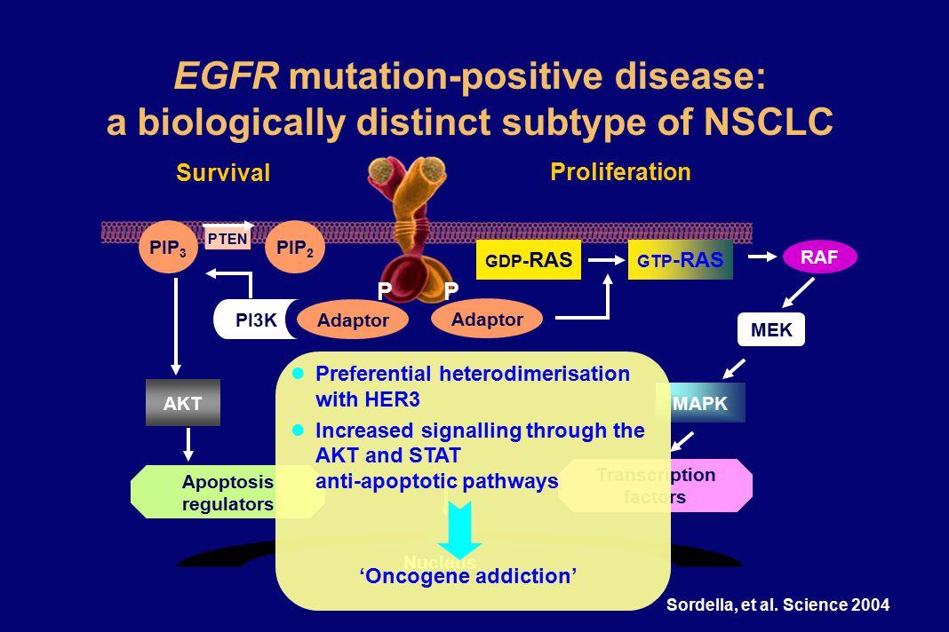 EGFR mutation-positive disease: a biologically distinct subtype of NSCLC PP Nucleus Adaptor Survival PIP 2 PI3K PIP 3 PTEN AKT Apoptosis regulators Proliferation Adaptor Transcription factors MAPK MEK RAF GTP -RAS GDP - RAS Sordella, et al.