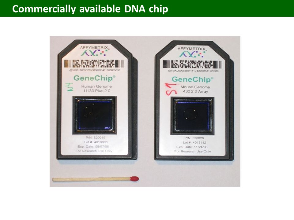 Commercially available DNA chip