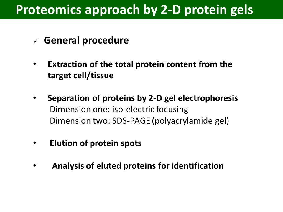 Proteomics approach by 2-D protein gels General procedure Extraction of the total protein content from the target cell/tissue Separation of proteins by 2-D gel electrophoresis Dimension one: iso-electric focusing Dimension two: SDS-PAGE (polyacrylamide gel) Elution of protein spots Analysis of eluted proteins for identification