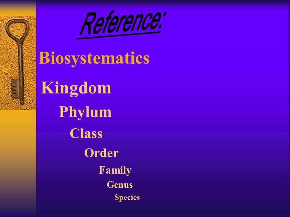 Biosystematics Kingdom Phylum Class Order Family Genus Species
