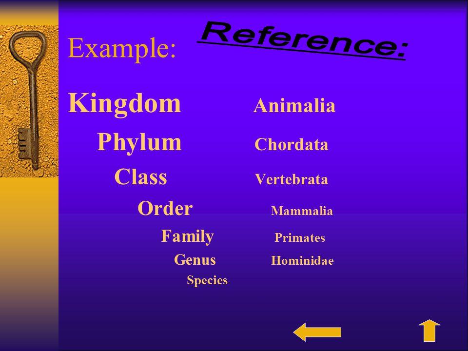 Example: Kingdom Animalia Phylum Chordata Class Vertebrata Order Mammalia Family Primates Genus Hominidae Species
