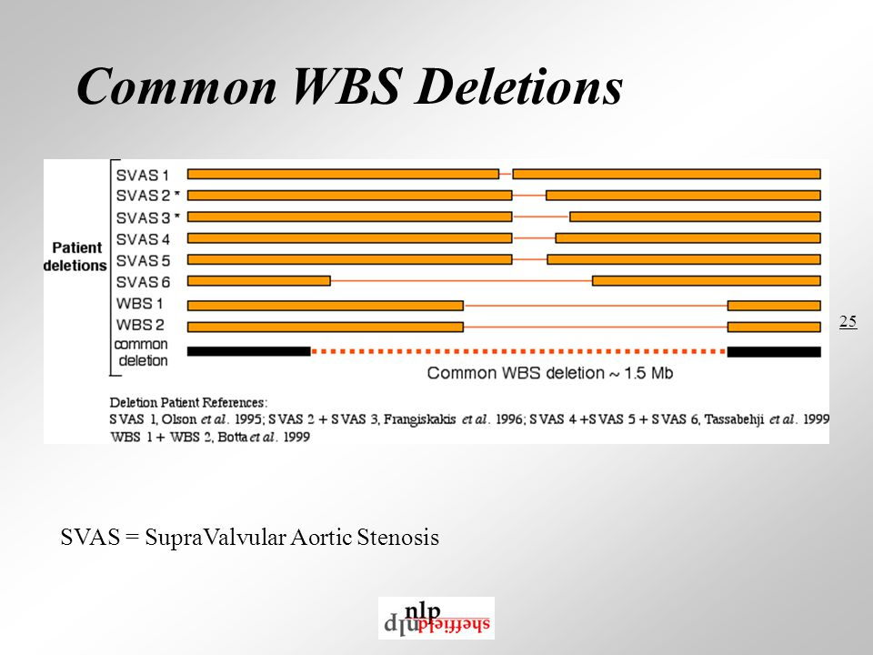 25 Common WBS Deletions SVAS = SupraValvular Aortic Stenosis