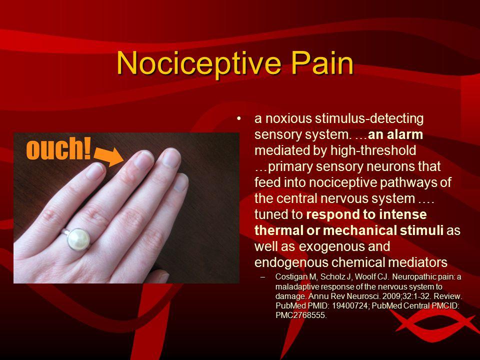 Nociceptive Pain a noxious stimulus-detecting sensory system.
