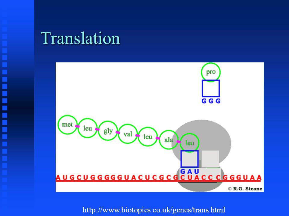 Translation http://www.biotopics.co.uk/genes/trans.html