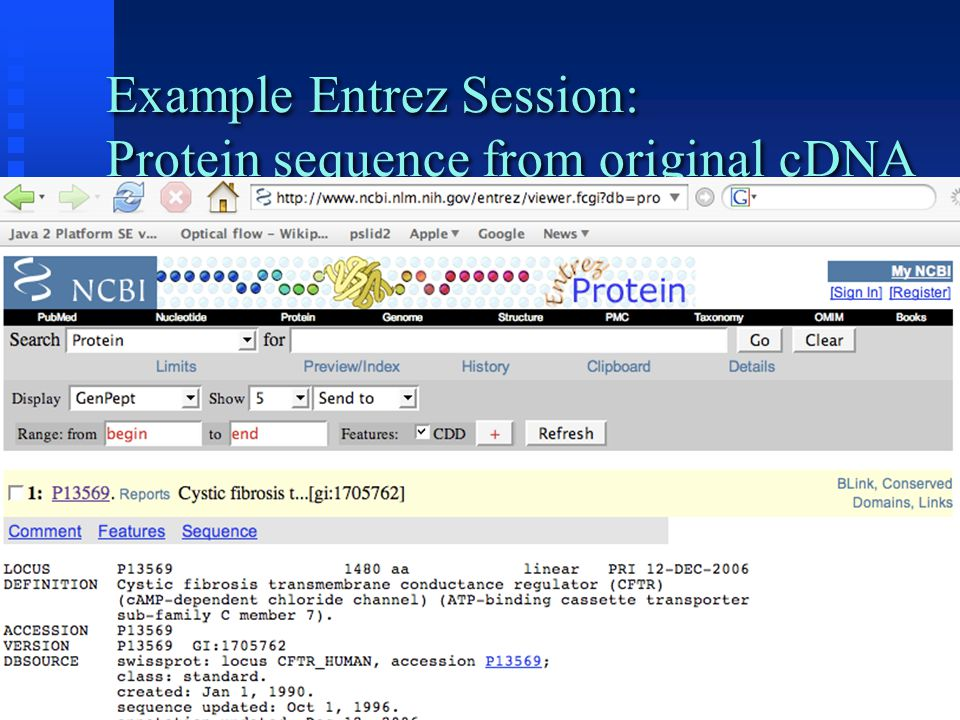 Example Entrez Session: Protein sequence from original cDNA
