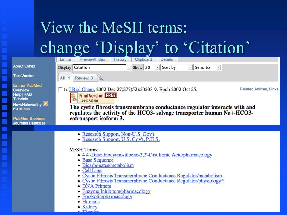 View the MeSH terms: change 'Display' to 'Citation'