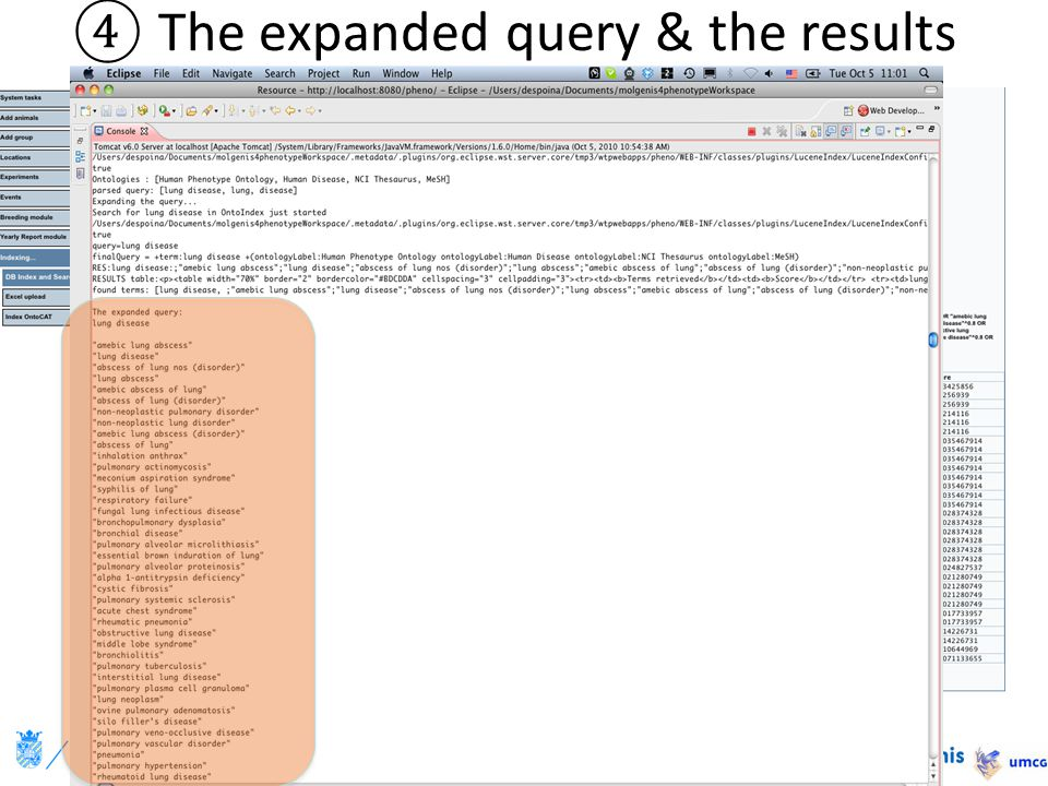 ④The expanded query & the results