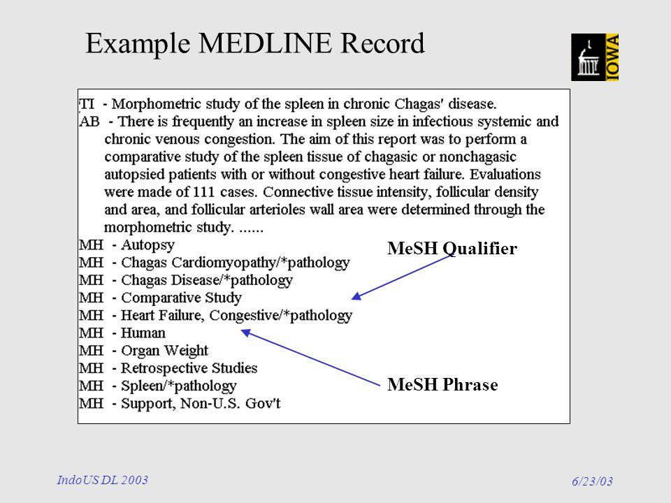 6/23/03 IndoUS DL 2003 MeSH Phrase MeSH Qualifier Example MEDLINE Record