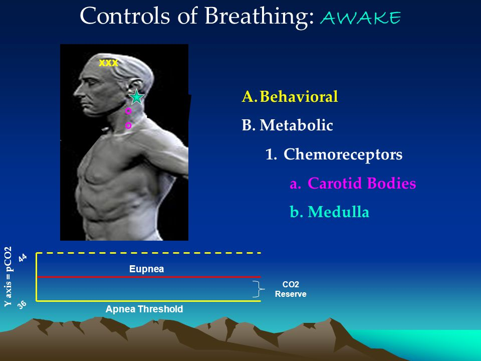 A.Behavioral B.Metabolic 1.Chemoreceptors a.Carotid Bodies b.Medulla 44 36 Eupnea Apnea Threshold CO2 Reserve Controls of Breathing: AWAKE Y axis = pCO2 o xxx o oo o
