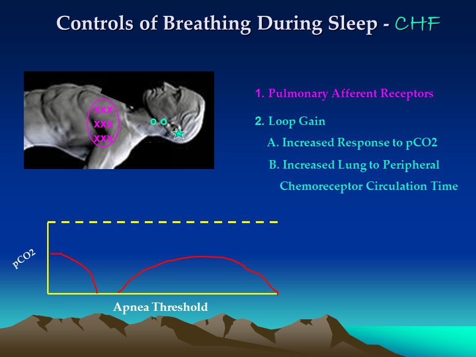 Controls of Breathing During Sleep - CHF 1. Pulmonary Afferent Receptors pCO2 Apnea Threshold 2.