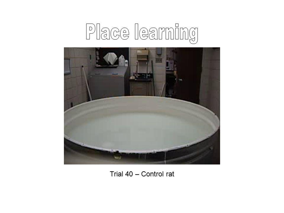 Trial 40 – Control rat