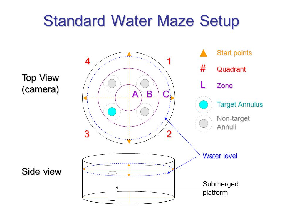 Top View (camera) Side view Standard Water Maze Setup Submerged platform # Quadrant 1 23 4 Start points Target Annulus L Zone Water level CBA Non-targ