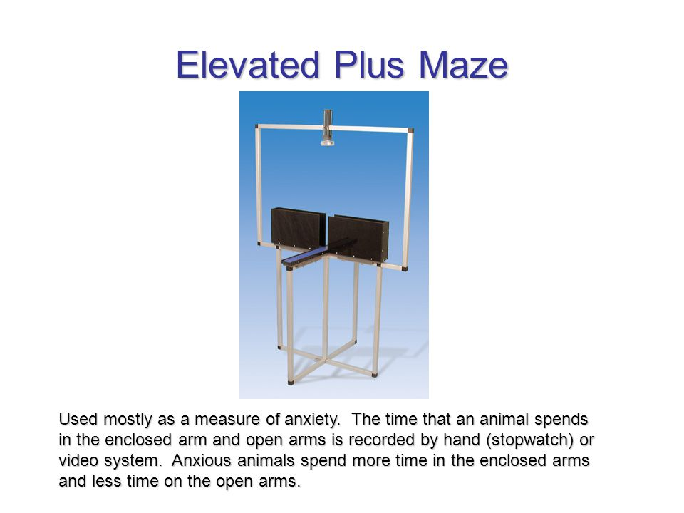 Elevated Plus Maze Used mostly as a measure of anxiety.