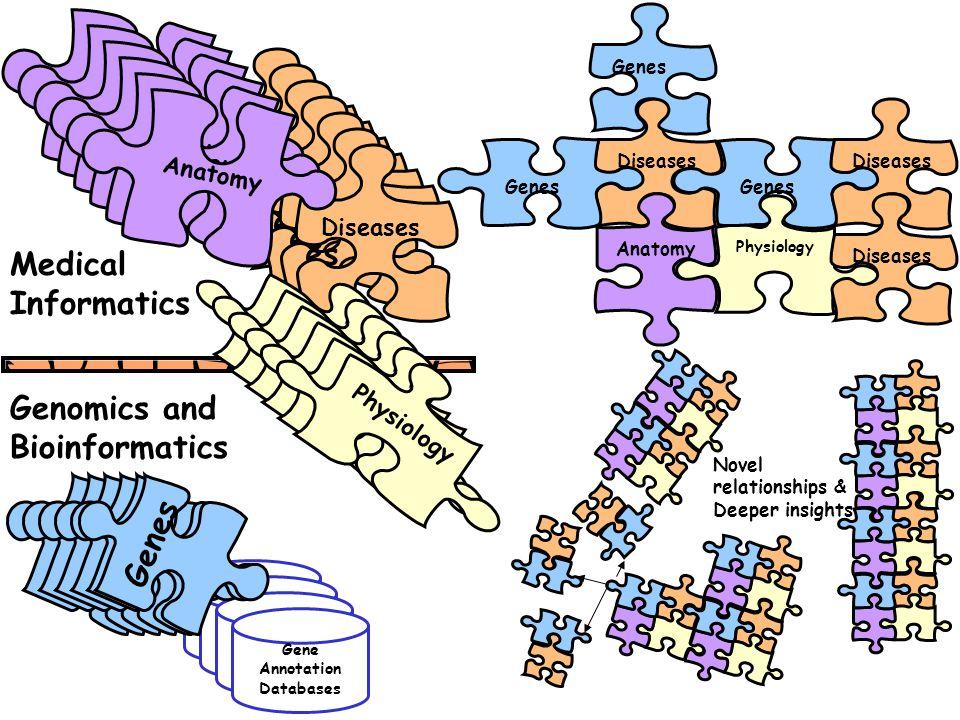 Gene Annotation Databases Diseas es Anatom y Genes Physiolog y Diseases Physiology Anatomy Genes Diseases Medical Informatics Genomics and Bioinformatics Novel relationships & Deeper insights