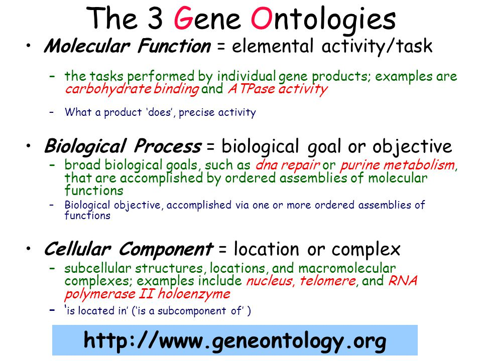 Molecular Function = elemental activity/task –the tasks performed by individual gene products; examples are carbohydrate binding and ATPase activity –What a product 'does', precise activity Biological Process = biological goal or objective –broad biological goals, such as dna repair or purine metabolism, that are accomplished by ordered assemblies of molecular functions –Biological objective, accomplished via one or more ordered assemblies of functions Cellular Component = location or complex –subcellular structures, locations, and macromolecular complexes; examples include nucleus, telomere, and RNA polymerase II holoenzyme –' is located in' ('is a subcomponent of' ) The 3 Gene Ontologies http://www.geneontology.org
