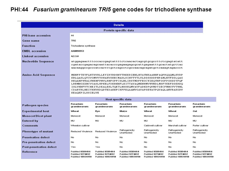 PHI:44 Fusarium graminearum TRI5 gene codes for trichodiene synthase