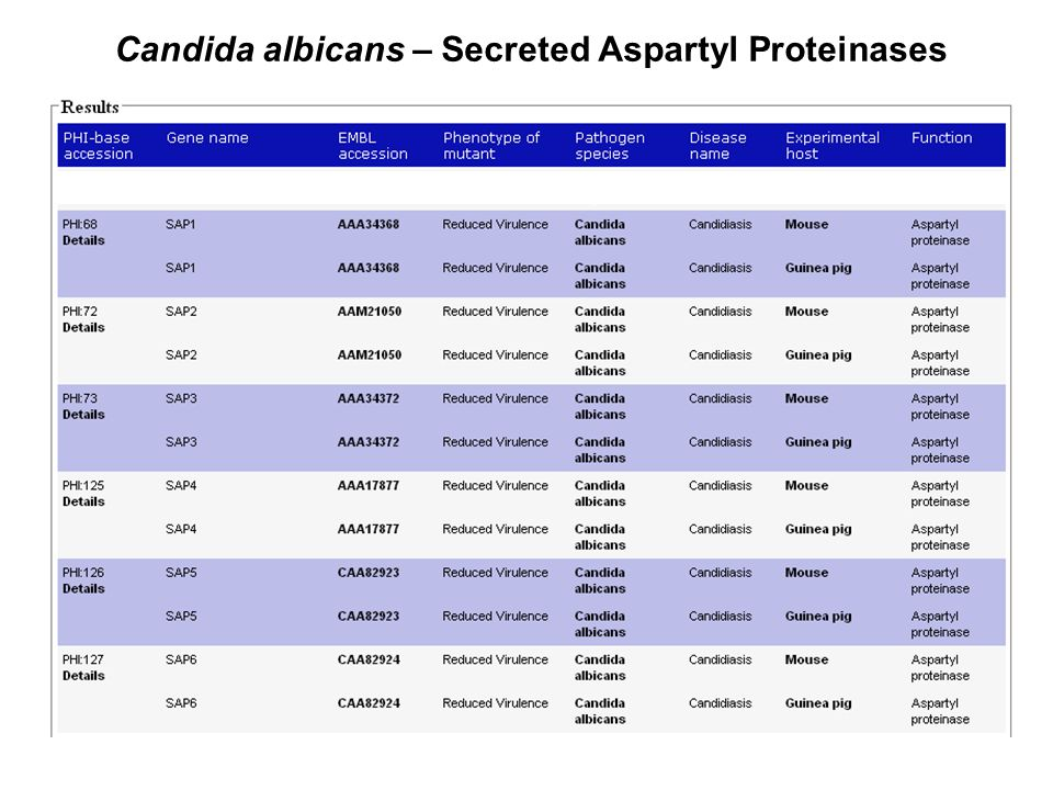 Candida albicans – Secreted Aspartyl Proteinases