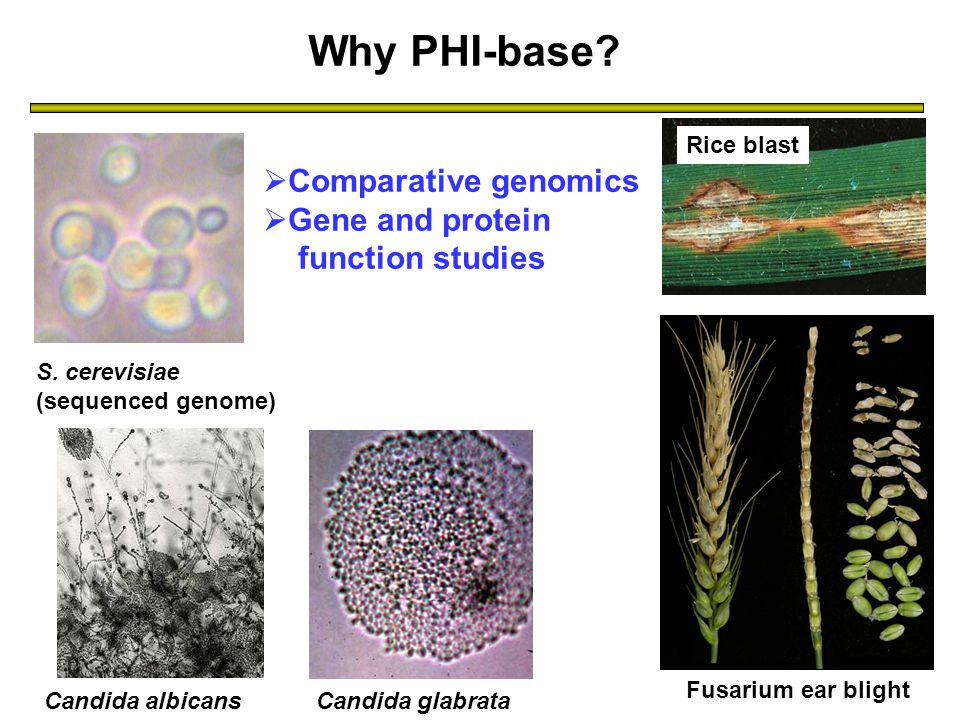 Why PHI-base. S.