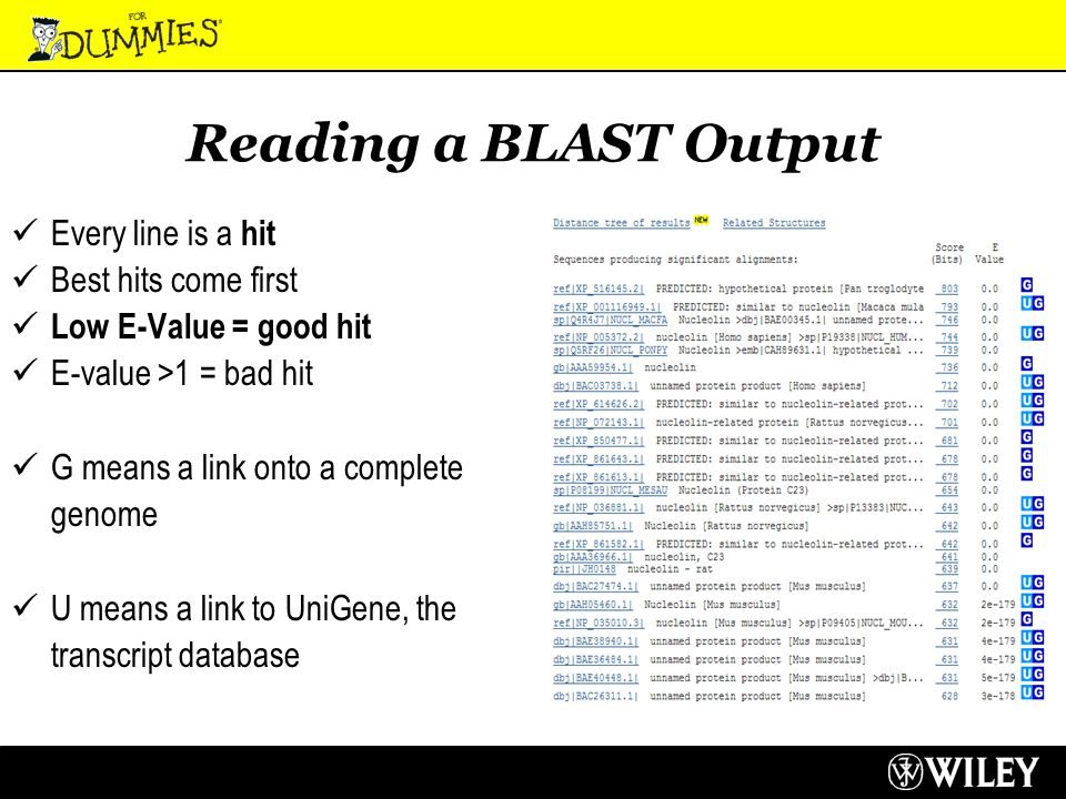 Reading a BLAST Output Every line is a hit Best hits come first Low E-Value = good hit E-value >1 = bad hit G means a link onto a complete genome U means a link to UniGene, the transcript database