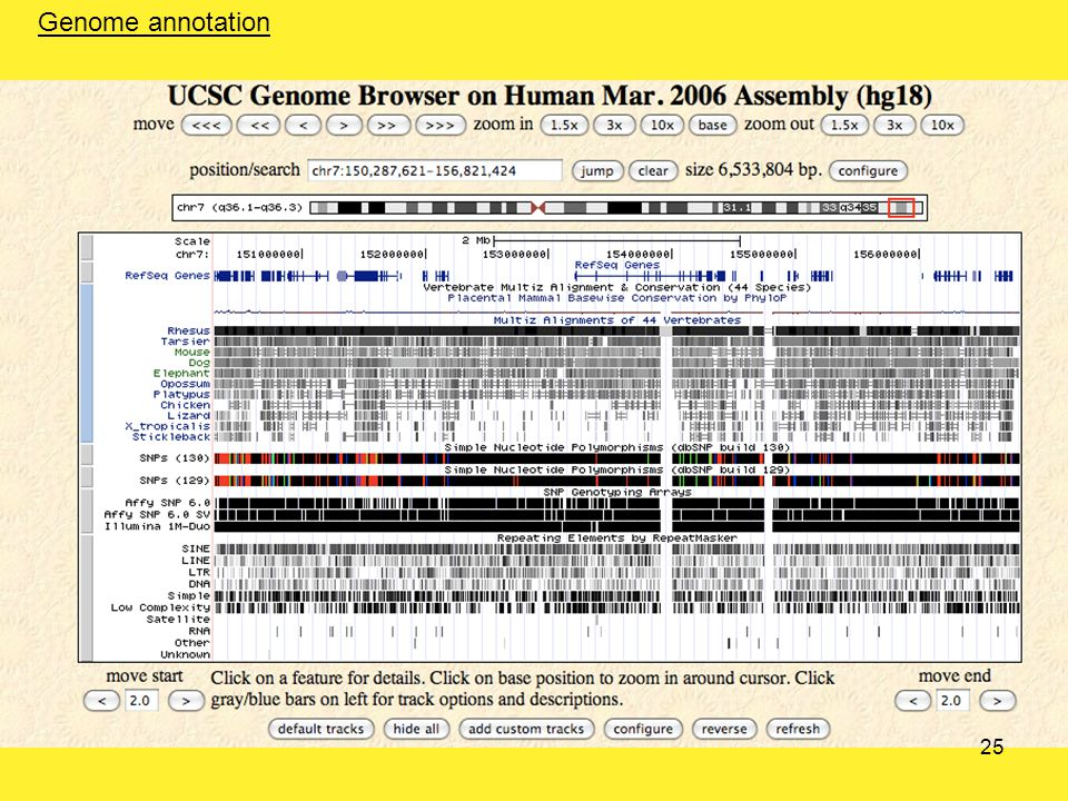 Genome annotation 25
