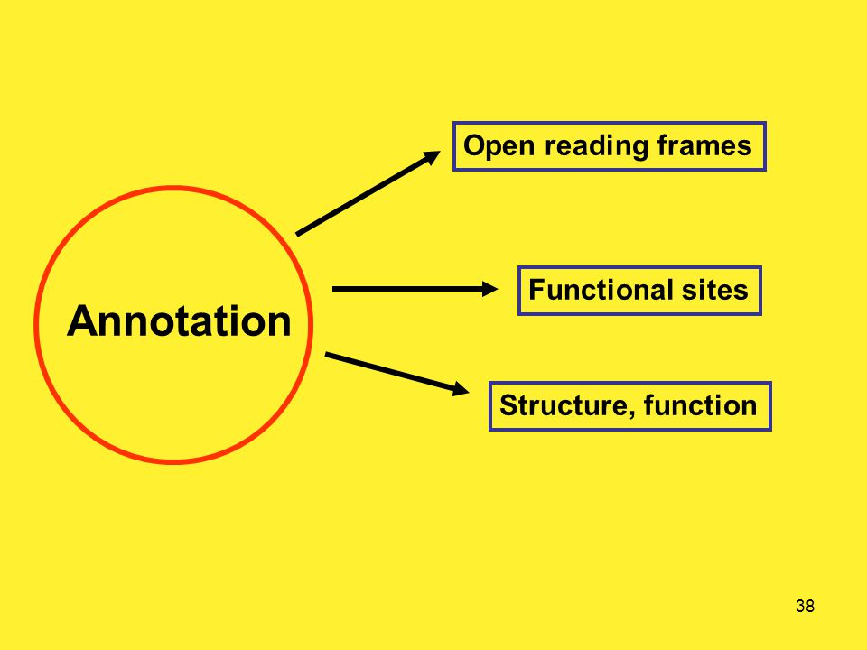 38 Annotation Open reading frames Functional sites Structure, function