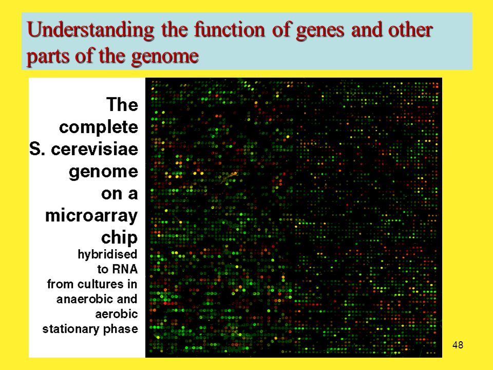48 Understanding the function of genes and other parts of the genome