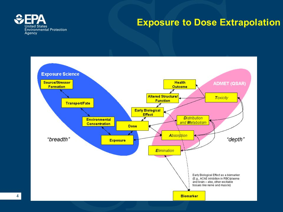 4 Exposure to Dose Extrapolation