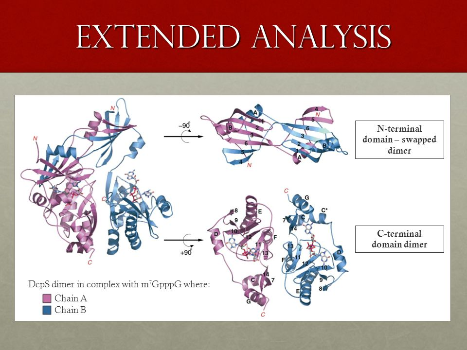 extended analysis DcpS dimer in complex with m 7 GpppG where: N-terminal domain – swapped dimer C-terminal domain dimer Chain A Chain B