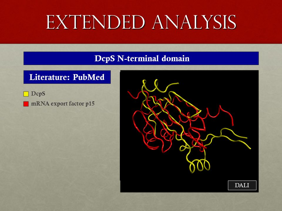 extended analysis DcpS N-terminal domain Literature: PubMed DcpS mRNA export factor p15 DALI