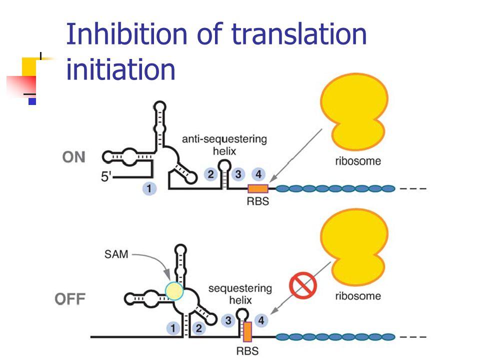 Inhibition of translation initiation
