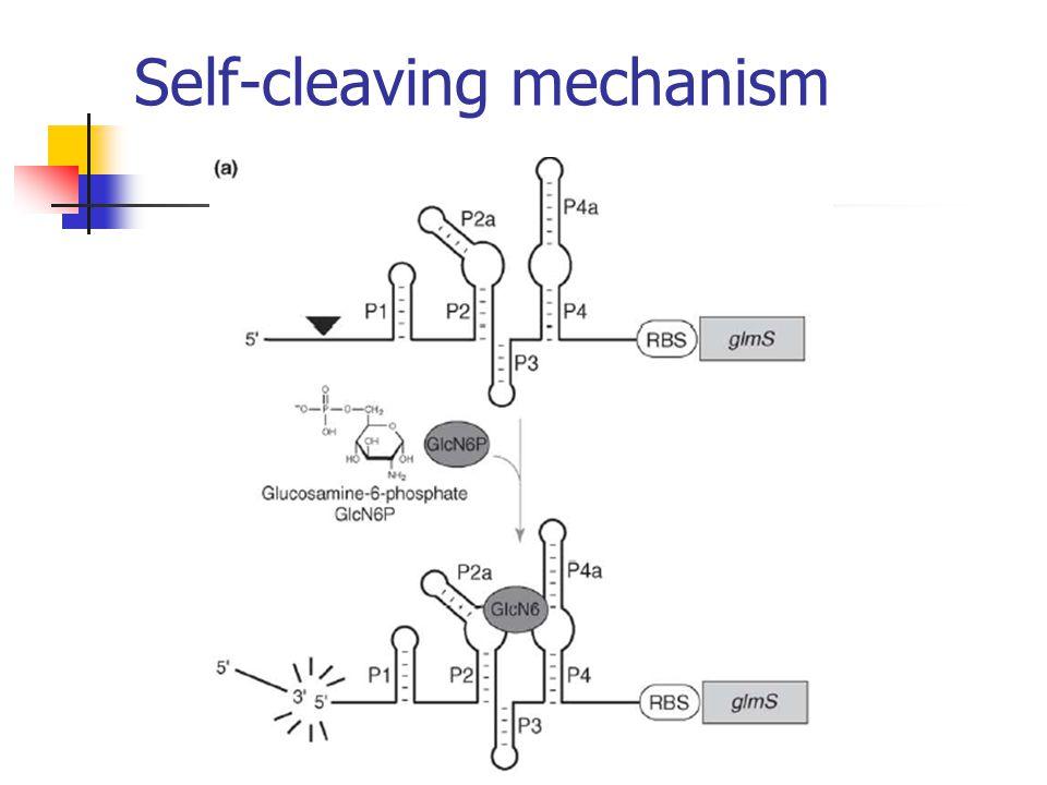Self-cleaving mechanism