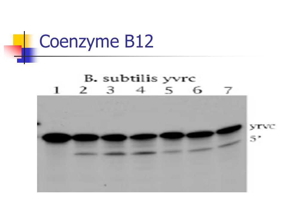 Coenzyme B12