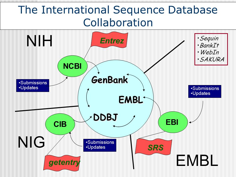 EBI GenBank DDBJ EMBL EMBL NIG CIB NCBI NIH SRS getentry Entrez The International Sequence Database Collaboration Submissions Updates Submissions Upda