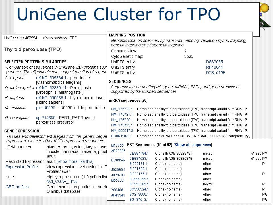 UniGene Cluster for TPO