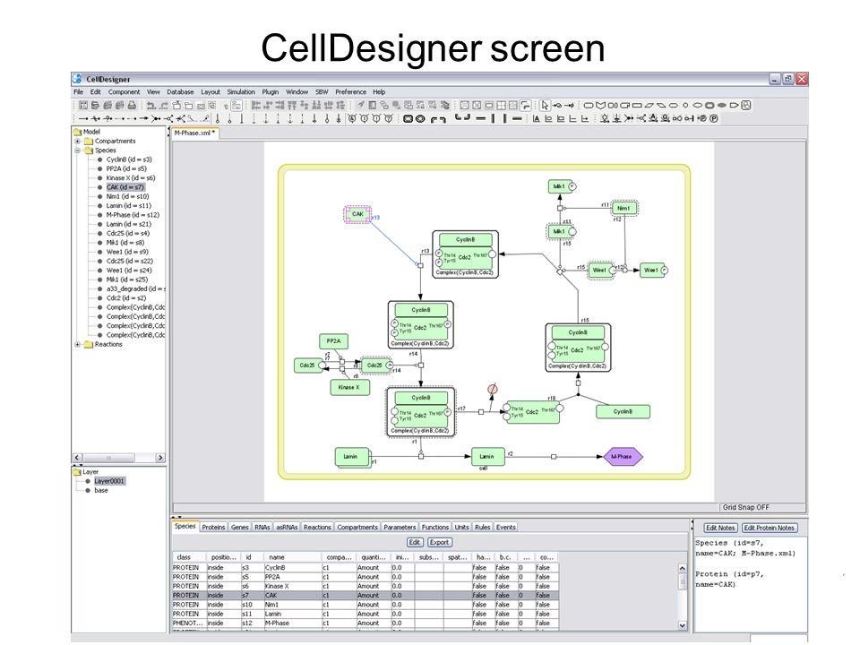 CellDesigner screen