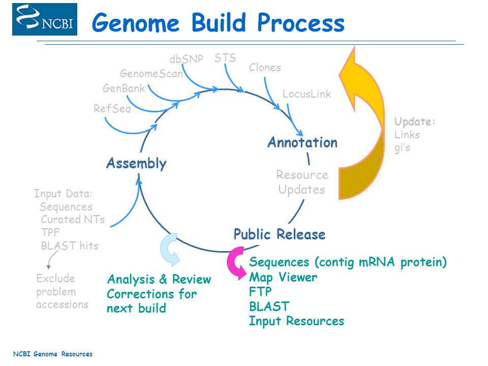 NCBI Genome Resources Genome Build Process Assembly Input Data: Sequences Curated NTs TPF BLAST hits Resource Updates STS Clones Annotation RefSeq FTP BLAST Input Resources Map Viewer Update: Links gi's Sequences (contig mRNA protein) Analysis & Review Corrections for next build LocusLink GenBank GenomeScan dbSNP Public Release Exclude problem accessions