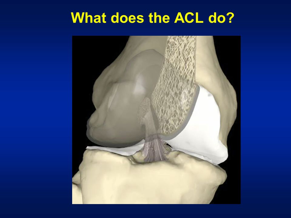 What does the ACL do?