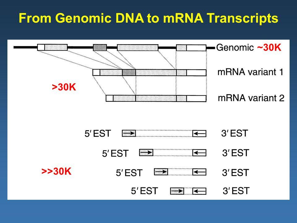 From Genomic DNA to mRNA Transcripts ~30K >30K >>30K