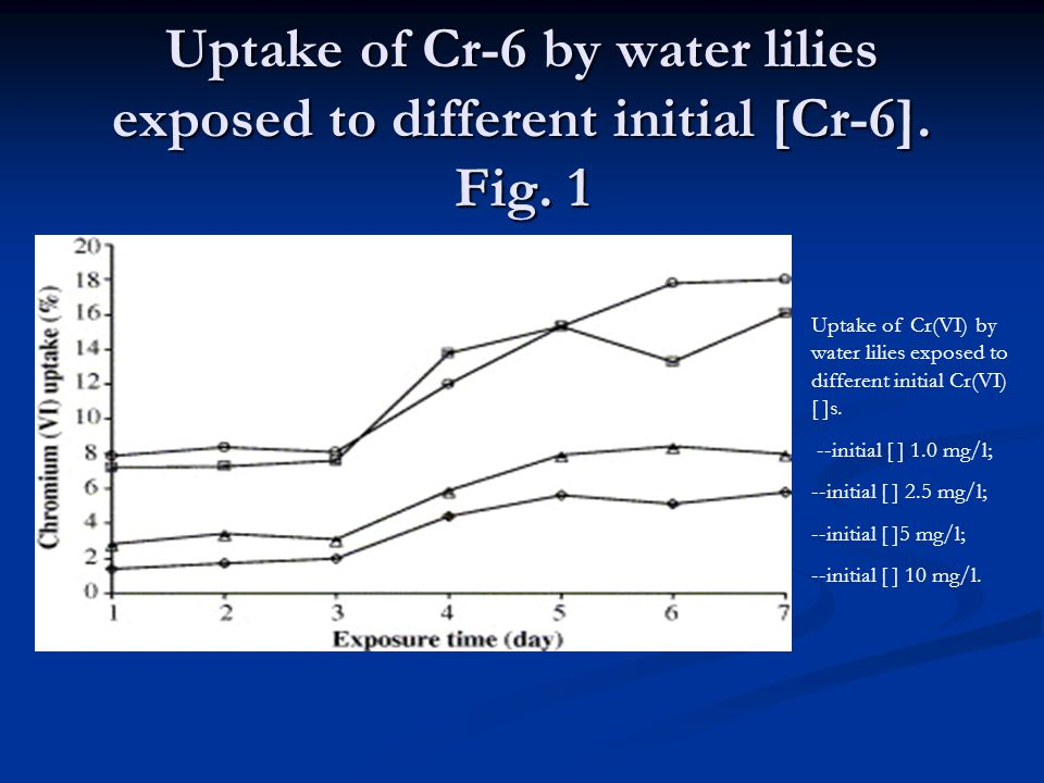 Uptake of Cr-6 by water lilies exposed to different initial [Cr-6].