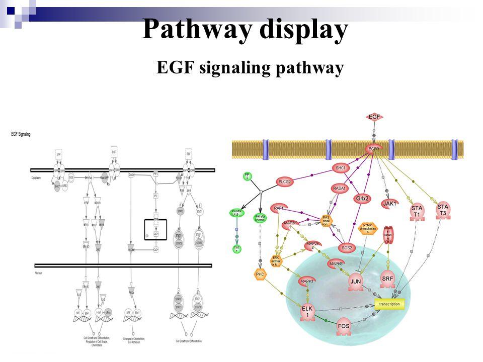 Pathway display EGF signaling pathway