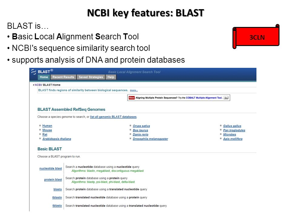 BLAST is… Basic Local Alignment Search Tool NCBI's sequence similarity search tool supports analysis of DNA and protein databases NCBI key features: B