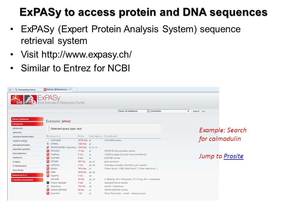 ExPASy to access protein and DNA sequences ExPASy (Expert Protein Analysis System) sequence retrieval system Visit http://www.expasy.ch/ Similar to En