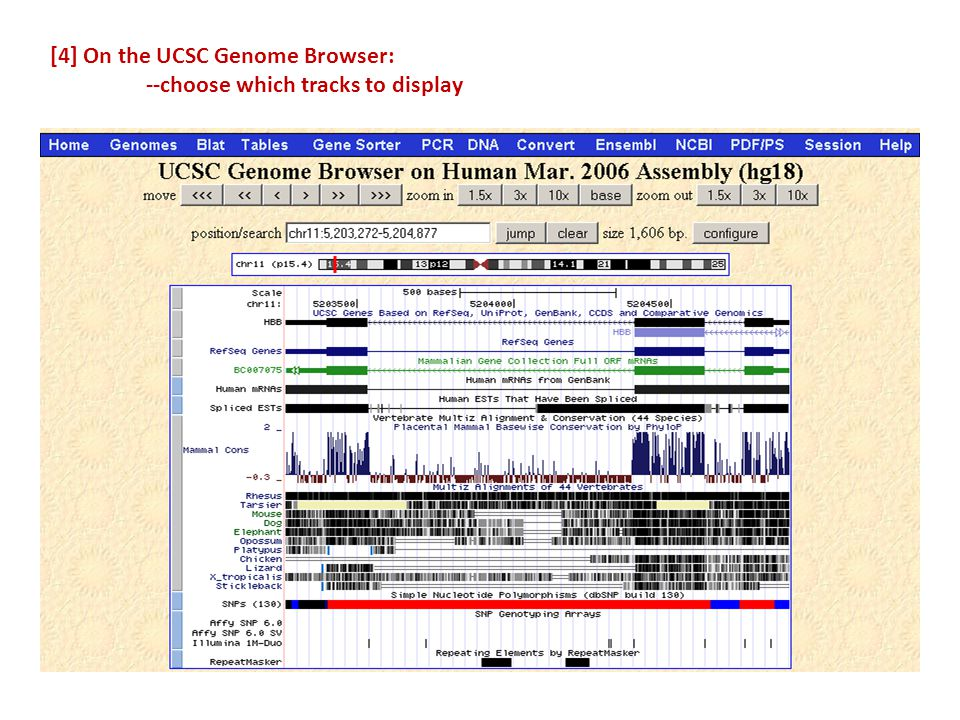 [4] On the UCSC Genome Browser: --choose which tracks to display