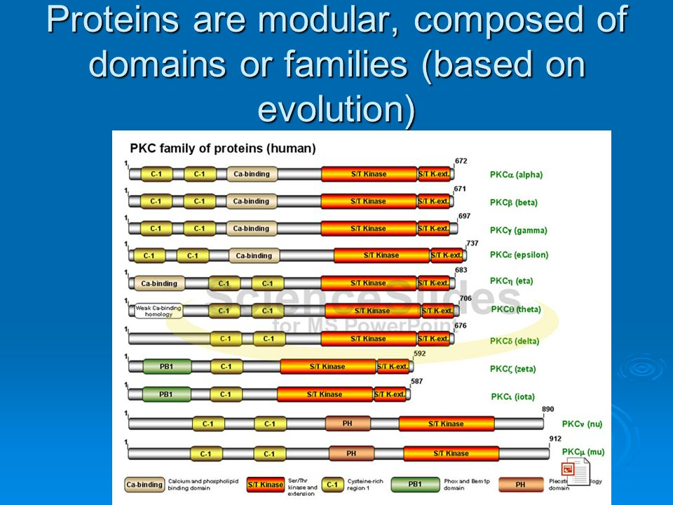 Proteins are modular, composed of domains or families (based on evolution)