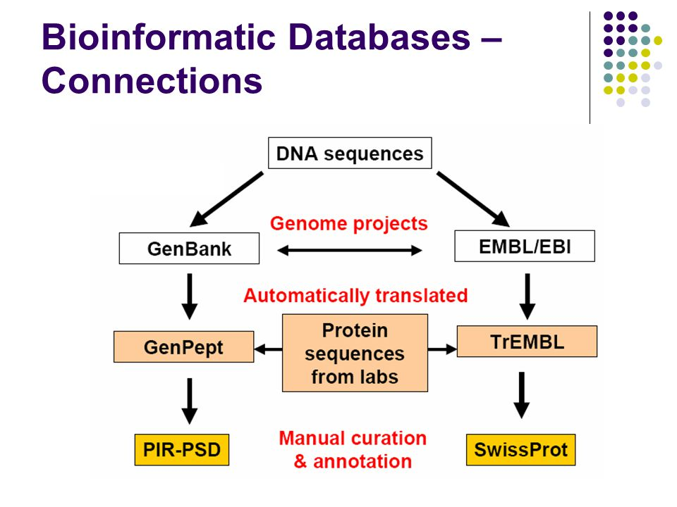 Bioinformatic Databases – Connections