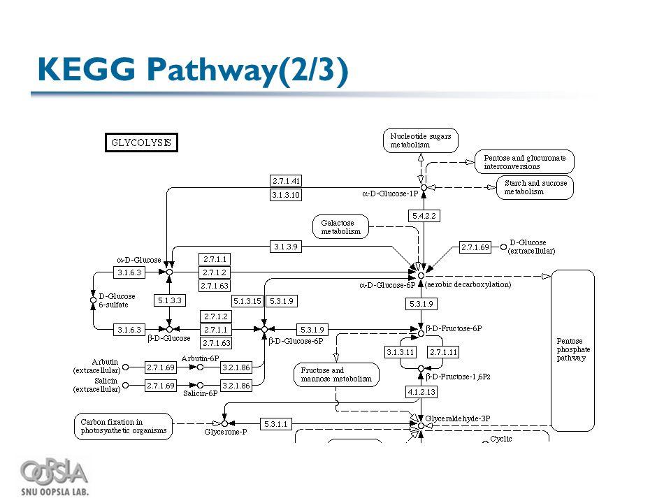 KEGG Pathway(2/3)