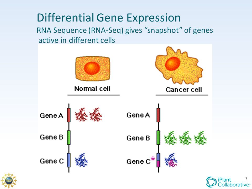 "7 Differential Gene Expression RNA Sequence (RNA-Seq) gives ""snapshot"" of genes active in different cells"